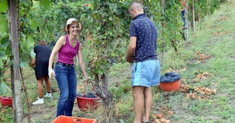 L'agricoltura attira i giovani: +12% degli under 35 nei primi mesi 2015   Dottore Commercialista   Scoop.it