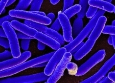 New Mathematics Could Neutralize Pathogens That Resist Antibiotics | Inequality, Poverty, and Corruption: Effects and Solutions | Scoop.it