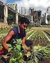 Farming in urban areas can boost food security | Growing Food | Scoop.it