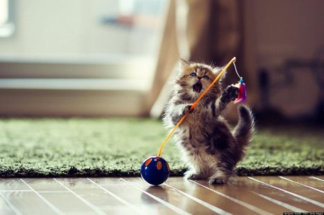 LOOK: Daisy The Kitten Might Be The World's Cutest Cat | Radio Show Contents | Scoop.it