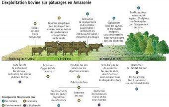 Quand l'industrie de la viande dévore la planète - Les blogs du Diplo   Agriculture urbaine   Scoop.it