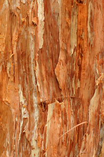 Tea Tree Oil for Mold Removal - mold remediation cost guide | Water Damage And Mold | Scoop.it