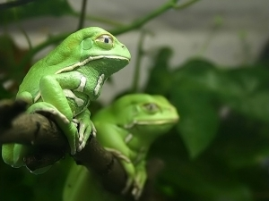 Frog may be answer to finding cancer cure | AJC's Frogroom | Scoop.it