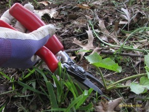 Controlling Weeds in the Wildlife Garden | Habitat Restoration and Sustainable Gardening | Scoop.it