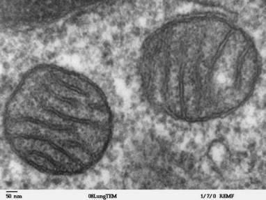 Actualité > L'acide lithocholique, un anticancéreux... produit par le corps ! | 21st Century Innovative Technologies and Developments as also discoveries, curiosity ( insolite)... | Scoop.it
