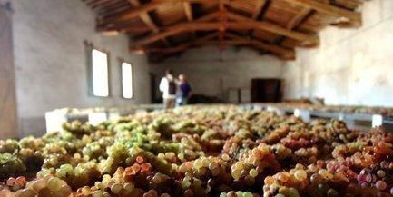 Aude : pique-niquez chez les vignerons, ils vous offrent le vin ! - Midi Libre   Epicure : Vins, gastronomie et belles choses   Scoop.it