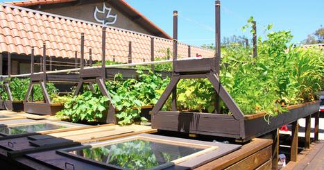 Build Your Own Aquaponics System | Aquaculture | Scoop.it