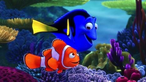 Nemo a Dory sa našli, z prírody miznú   Správy Výveska   Scoop.it