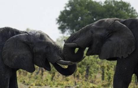 Deadly shootout with poachers at Zimbabwe park   eNCA   Rapid Environmental Services   Scoop.it