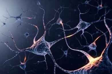 Ricordi perduti ma non per sempre - Le Scienze | Neuroscienze applicate | Scoop.it