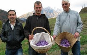 Jézeau. Fier producteur de safran | Vallée d'Aure - Pyrénées | Scoop.it