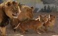 Now Even Lions Are Sending Texts | Web of Things | Scoop.it