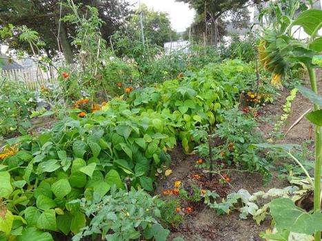 Jardin partagé en ville : un fleurissement de (bio)diversité humaine et végétale | Les colocs du jardin | Scoop.it