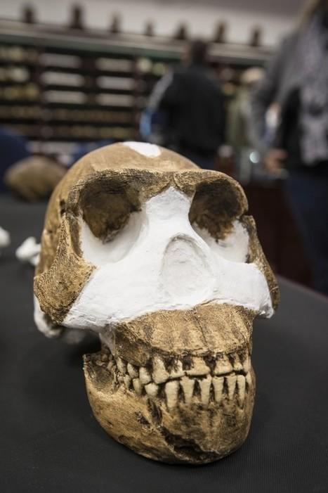 Une espèce inconnue du genre humain a été découverte | Aux origines | Scoop.it