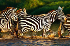 Planning an African Safari | Gypsy in My Soul | Scoop.it