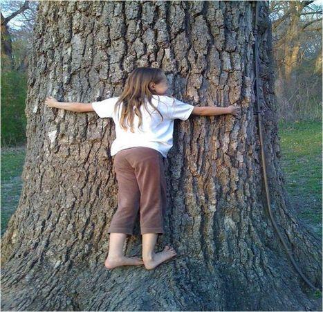 Environment   Arborilogical   Scoop.it