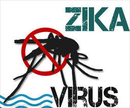 Newly Discovered Antibodies Efficiently 'Neutralize' the Zika Virus | Immunology and Biotherapies | Scoop.it