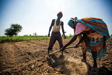 Climate Change & Agriculture in East Africa - Inter Press Service | CGIAR Climate in the News | Scoop.it