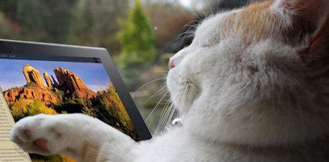 Multi-device websites: How can hoteliers have it all? | Multi-écrans & e-tourisme | Scoop.it