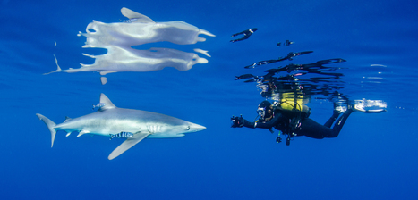 Launch of Shark Business • Scuba Diver Life | KNOWING............. | Scoop.it