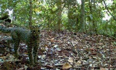 How wildife camera traps are revolutionising conservation | Technoculture | Scoop.it
