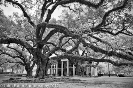 John Eaton Photography | Oak Alley Plantation: Things to see! | Scoop.it