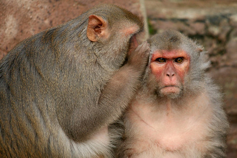 Monkey Brain Area Keeps Count of Kindnesses | for better life... | Scoop.it