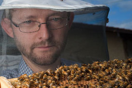 The bee's knees: WA researchers saving the world | Sustain Our Earth | Scoop.it