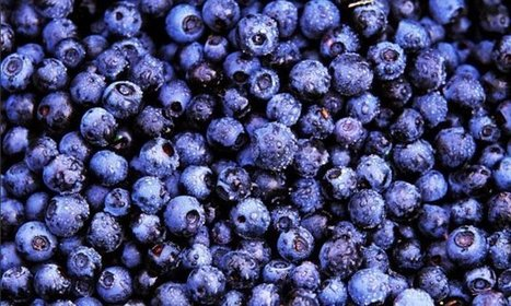 Why blueberries really ARE the best food for your health | zestful living | Scoop.it