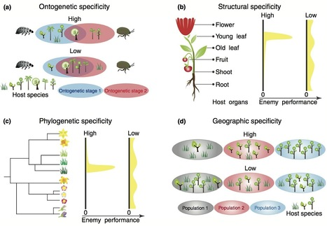 Trends Plant Science: Unifying concepts and mechanisms in the specificity of plant–enemy interactions (2012) | Plant science | Scoop.it