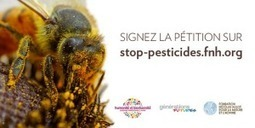 Pesticides: Stop au massacre des abeilles ! | Toxique, soyons vigilant ! | Scoop.it
