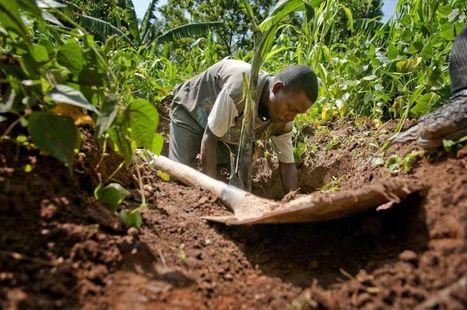 Année internationale des sols| 2015 International Year of Soils | Un sol vivant pour nos enfants | Scoop.it