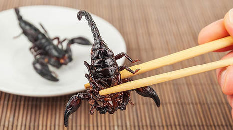 Would you eat this fried scorpion?   Entomophagy: Edible Insects and the Future of Food   Scoop.it