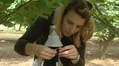 Une infusion bio pour lutter contre le Balanin, la bête noire des producteurs de noisettes | Agriculture en Dordogne | Scoop.it