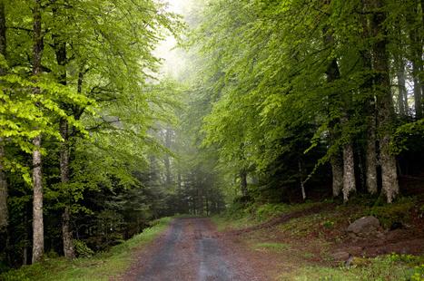 La forêt en France : un patrimoine mal valorisé et en péril   Patrimoine Végétal et Biodiversité   Scoop.it