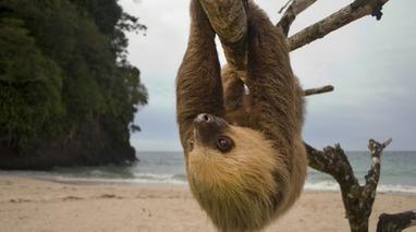 Costa Rica cerrará todos los zoológicos y liberará a cada animal cautivo | La R-Evolución de ARMAK | Scoop.it