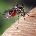 Smartphone et santé: L'application Matibabu pour détecter le Paludisme | Veille smartphone | Scoop.it