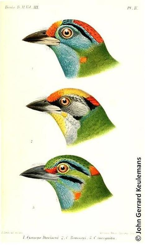 "EBD publication: ""Explaining tropical biodiversity"" // ""Explicando la diversidad... | PublicacionesEBD | Scoop.it"