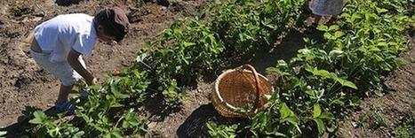 Jardins de Noé Junior, une sensibilisation des enfants au respect de la biodiversité | Les colocs du jardin | Scoop.it