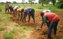Le secteur rural absorbe 17% des engagements de la BAD au Sénégal | Questions de développement ... | Scoop.it