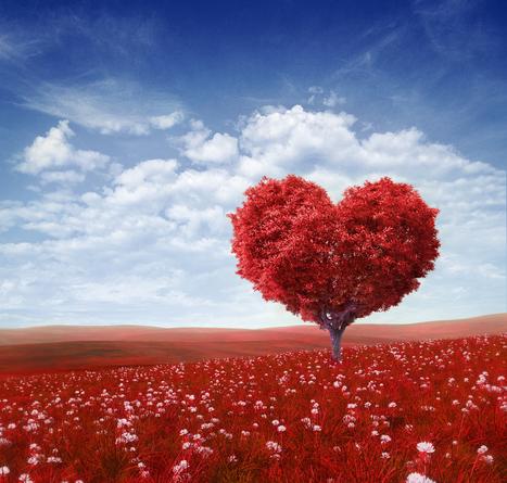 """Stoner, tú serás maestro"": la enseñanza como enamoramiento | APRENDIZAJE | Scoop.it"