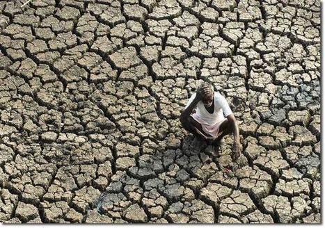 India's Dangerous 'Food Bubble' | Zero Footprint | Scoop.it