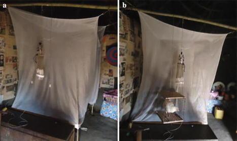 Une solution inattendue pour éviter de se faire piquer par un moustique porteur du paludisme : dormir avec… un poulet ?! (en anglais) | EntomoNews | Scoop.it