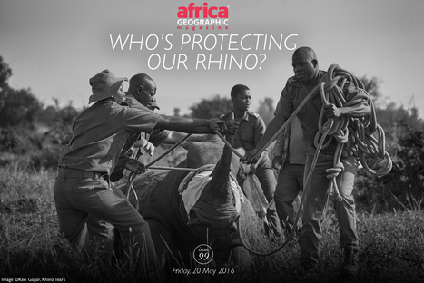 Who's protecting our rhino? I Africa Geographic | Biology resources for South African teachers | Scoop.it