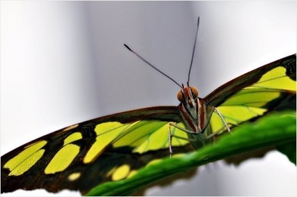 """Butterfly from Below 