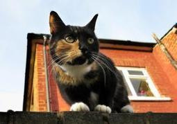 A cat census in London: Zoo to create map of city's felines | Radio Show Contents | Scoop.it