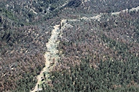California drought's devastating toll: 12 million trees killed in one year | GarryRogers NatCon News | Scoop.it