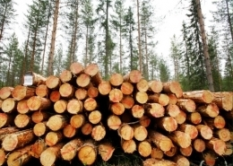 Good News from Finland - Walki develops biomass cover | Finland | Scoop.it