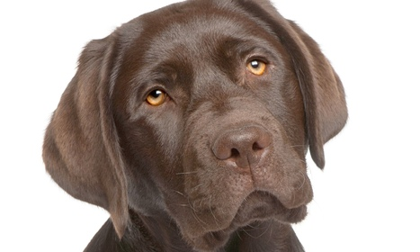 Roslin mention: Labs in the lab. How scientists aim to root out disease in dogs | BIOSCIENCE NEWS | Scoop.it