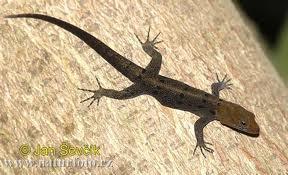 The gecko | El reino animal U.E.F. Fray B. de las Casas S. | Scoop.it